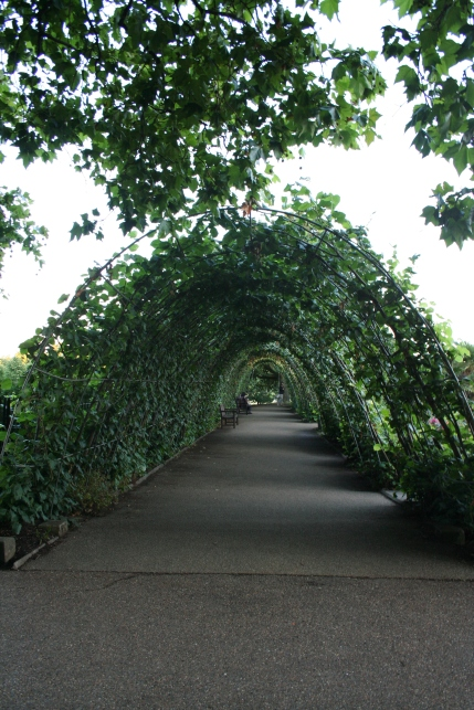 Another great shot Laura got of one of the ivy-covered walkways near the gardens beside the palace.